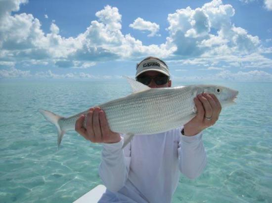 Andros Island Bonefishing Club: Nice Bonefish