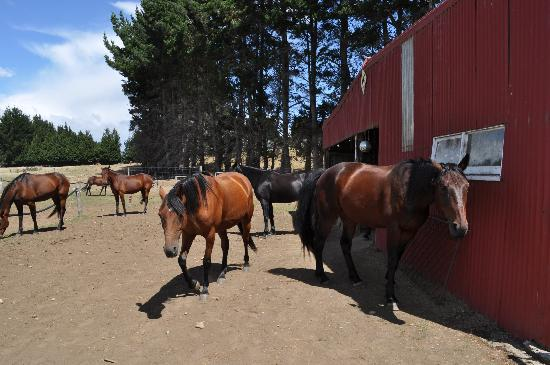 Westray Adventures - Horse Treks & Quad Tours: Horses adapted with the level of each