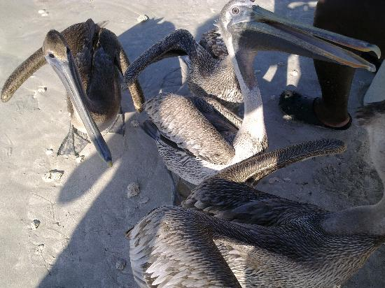 Iberostar Varadero: sur la plage
