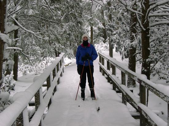 Blackwater Falls State Park Lodge: Shay Trace Trail