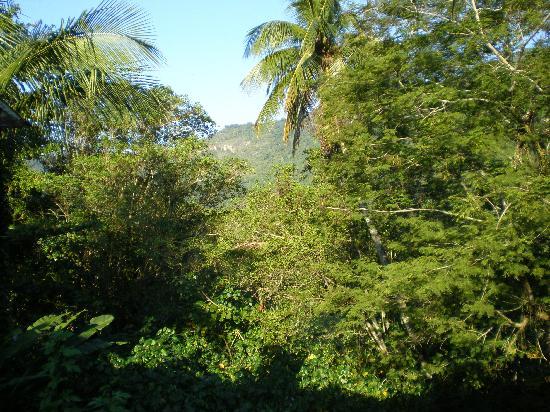 Pousada Bossa Nova: jungle view