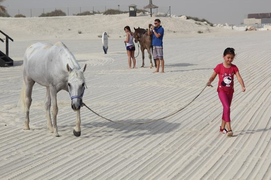The Desert Ranch: Dive and swim with horses