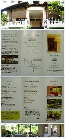 White Lotus Yoga & Meditation Centre: White Lotus