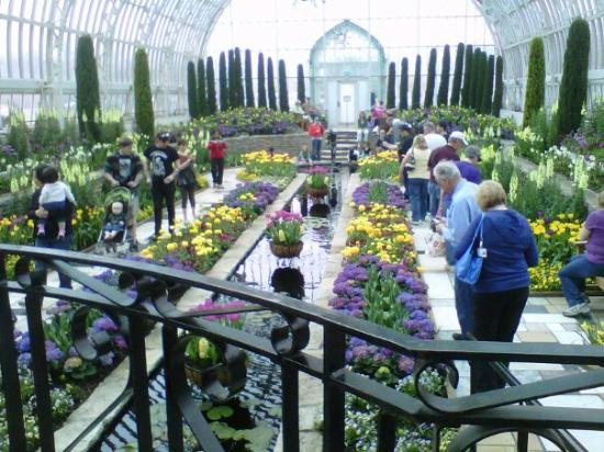 Saint Paul, MN: Spring Flowers in the Como conservatory