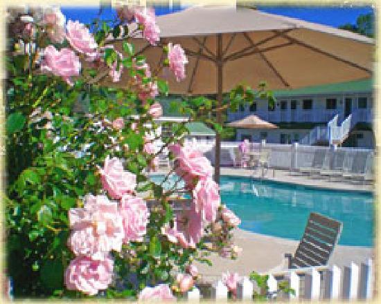 Ne'r Beach Motel: Relax by our pool