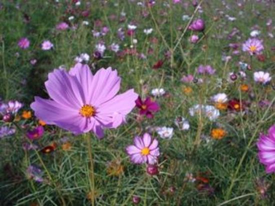 Sakai, Japón: お花畑