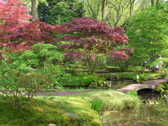 Schöner kleiner japanischer Garten - Japanese Garden, Den Haag ...