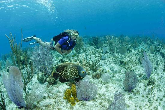 Living The Dream Divers Seven Mile Beach Cayman Islands Top Tips Before Y