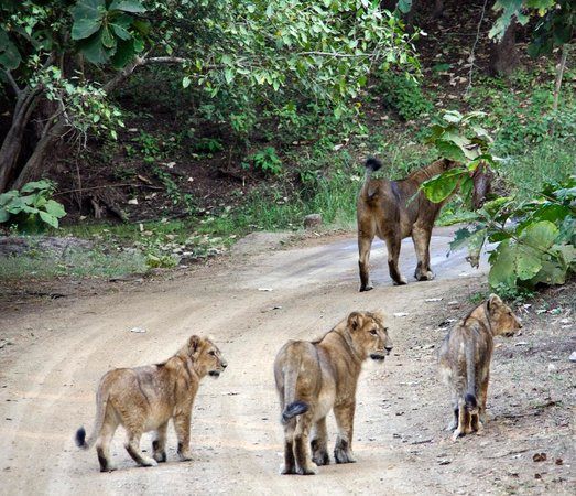 Gir National Park and Wildlife Sanctuary