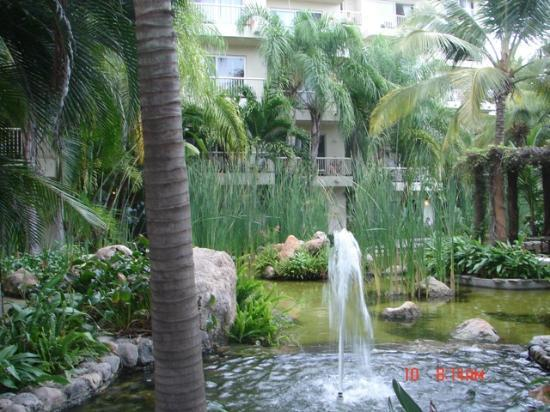 Bel Air Collection Resort & Spa Vallarta : Grounds lovely and well cared for!