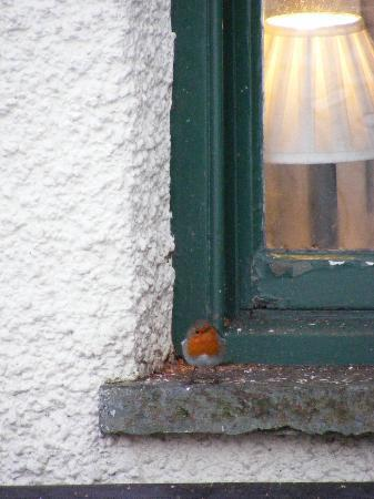 The Tower Bank Arms: Robin waiting for his pub breakfast