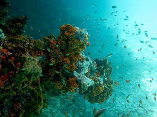 Marazul Dive Resort 사진