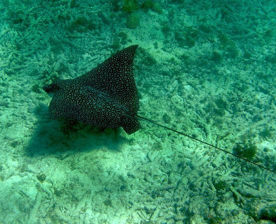 Marazul Dive Resort: Curacao2012 jana-majk.com