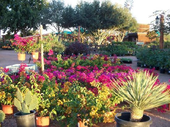 Lantana Nursery at Wildseed Farms. One of the Largest Nurseries in Central Texas