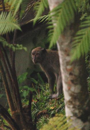 Hanging Gardens of Bali: Visiteur inattendu