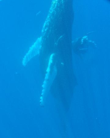Hawaii Ocean Rafting : Mother and calf were with us for an hour