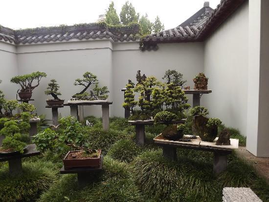 Chinese Garden of Friendship: Bonsai Garden