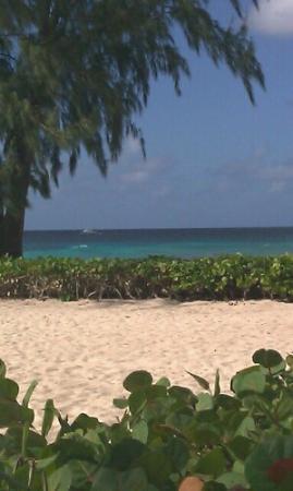 Divi Southwinds Beach Resort: Barbados 2012