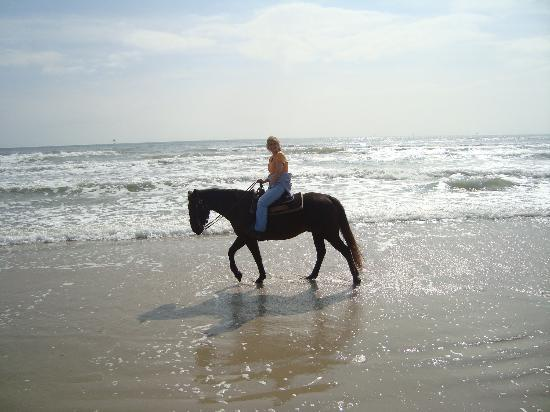 Horses On The Beach: Corpus Christi: My horse, Roman, liked to walk in the waves.