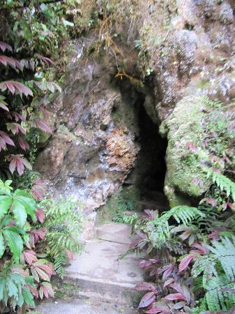 Aranui Cave : Cave entrance