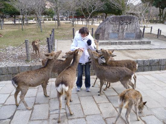 Royal Park Hotel The Kyoto: very friendly wildlife in Nara
