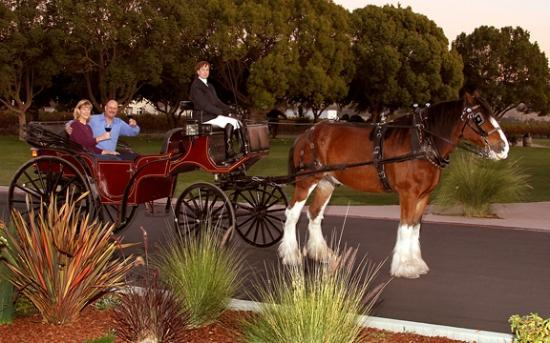 Wine tasting carriage tours in Livermore- A unique way to experience Livermore wine country!