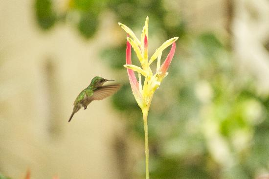 Coco Palm Resort: Lots of hummingbirds!