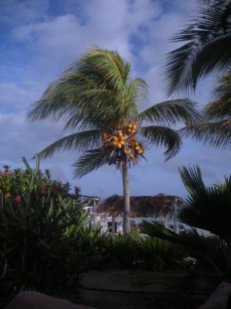 Sorobon Beach Resort: Palm trees in the breeze at Sorobon