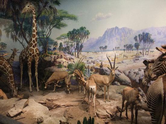 Animals At Nyc Natural History Museum