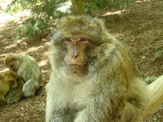 La Montagne des Singes : singe