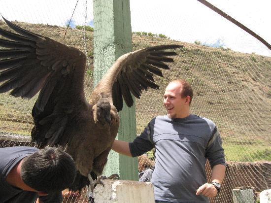 Santuario Animal de Cochahuasi: Seeing a condor