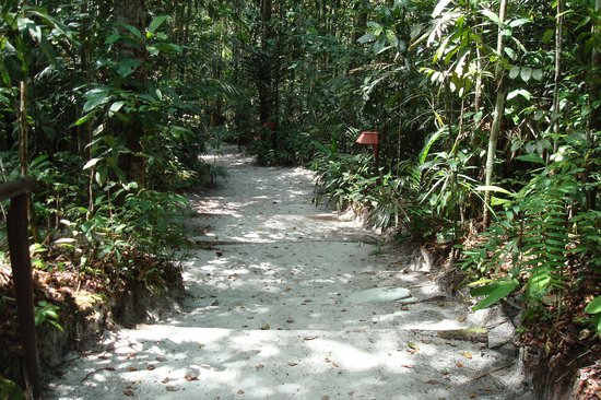 Amazon Ecopark Jungle Lodge: Walkway