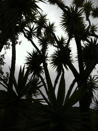 El Terado Terrace: botanical gardens- a sillouette
