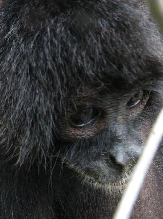 Summit Botanical Gardens: Monkey