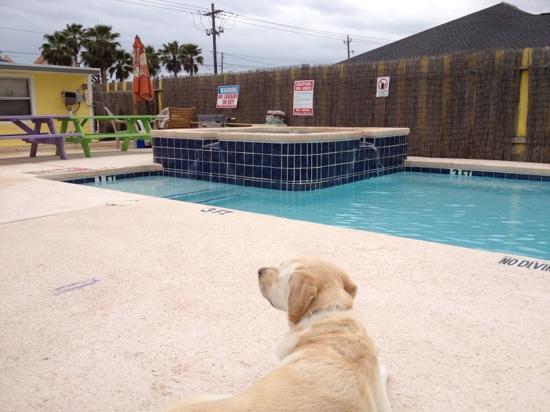 3rd Coast Inn: poolside