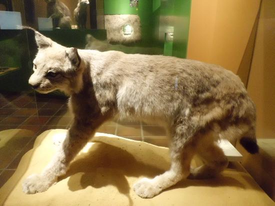 Natural History Museum (Natuurhistorisch Museum): one of the exhibits
