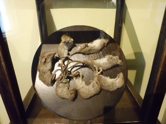 Natural History Museum (Natuurhistorisch Museum): rat king!