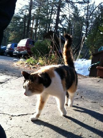 Strawberry Creek Inn: B&B cat