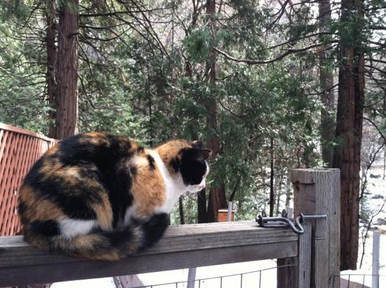 Strawberry Creek Inn: cat in the backyard