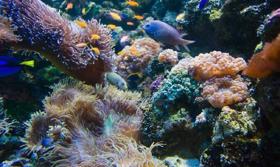 Sea Life Sydney Aquarium : Coral Cay