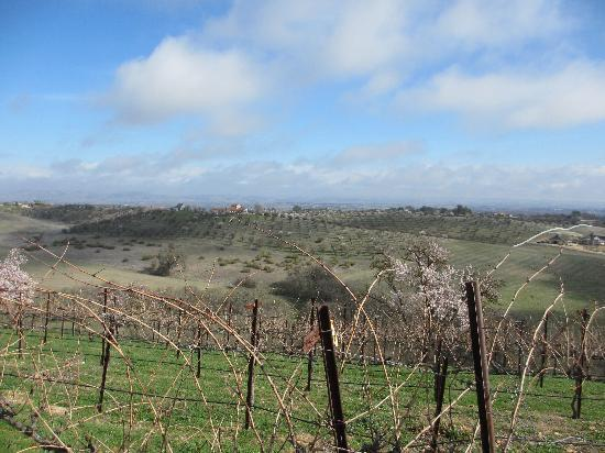 Seven Quails Vineyards Bed & Breakfast: A great view
