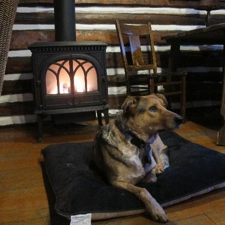 Pioneer Guest Cabins: Dog loved the fireplace