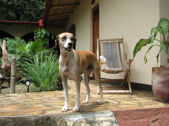 Apoyo Lodge: love dogs? you will love it here