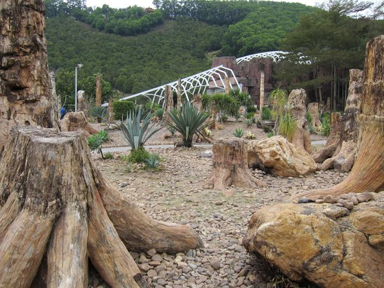 Xianhu Fossil Forest