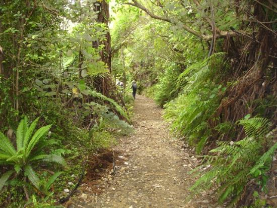 Natural Encounters Walks - Day Tours: typical view in the Beech rain forest