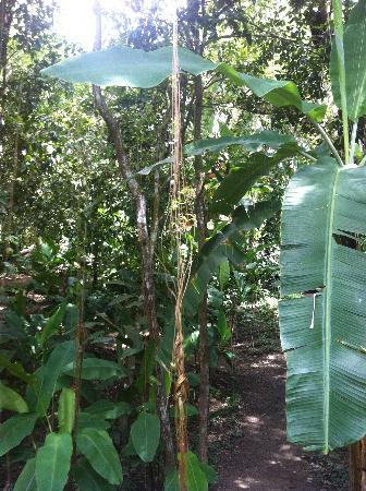 Trancoso Jungle Lodge: Chemin portail - bangalows