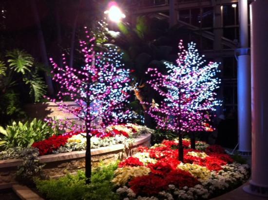 Christmas Lights Show Foto Di Lewis Ginter Botanical Garden Richmond Tripadvisor
