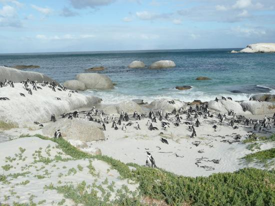 Boulders Beach Lodge: Boulders Beach