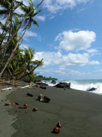 La Ponderosa Beach and Jungle Resort: beach