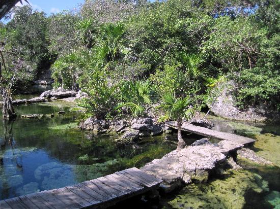 Cenote Azul: Cenote